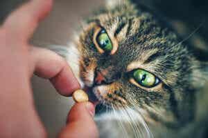 kedilere ilaç vermek