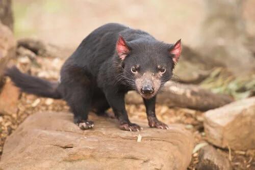 Avustralya: Keseli Hayvanların Ülkesi