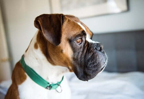 Köpeklerde Depresyon: Önlemenin Yolları ve Tedavisi