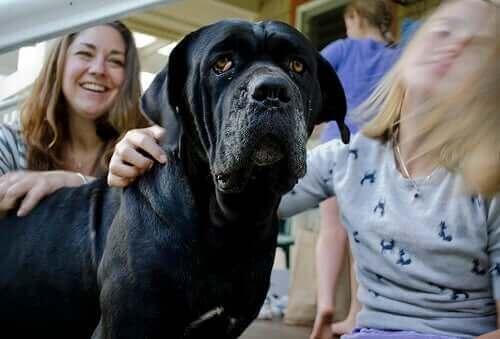 Köpek Korkusu: Sinofobi Nasıl Yenilir?