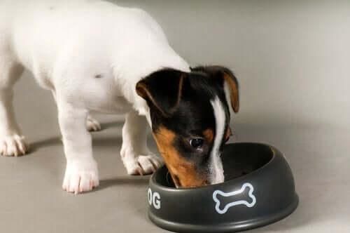 mama kabından yemek yiyen köpek