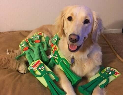 Köpek En Sevdiği Oyuncağı Gibi Giyinmiş Sahibine Tepki Veriyor: Gumby