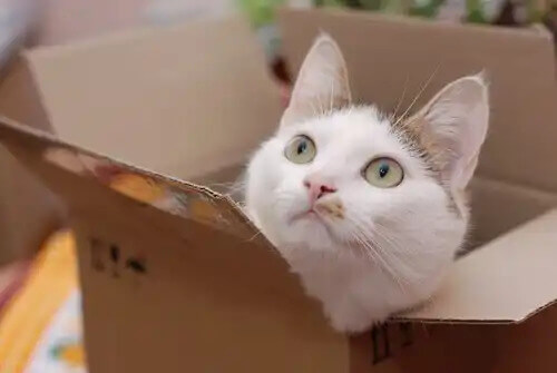 kutudan bakan kedi