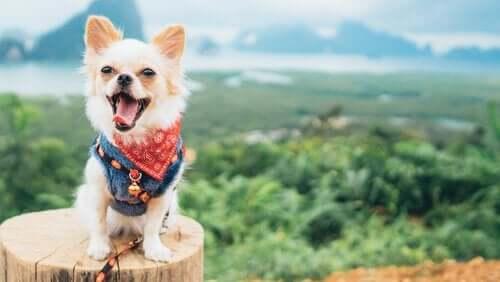 doğada mutlu köpek