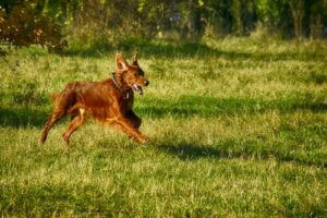 İnsanların Köpeklerini Parka Götürdüklerinde Yaptıkları 8 Hata