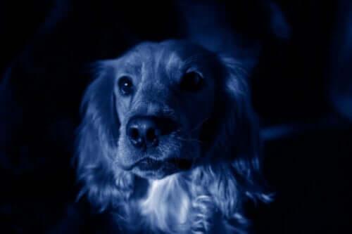 Bir Rus Şehrinde Aniden Mavi Köpekler Ortaya Çıkıyor