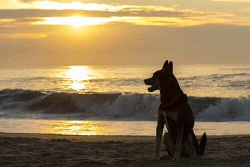 Evcil Hayvanınızın Kaybından Sonra Yenisini Almak İçin Ne Kadar Beklemelisiniz?