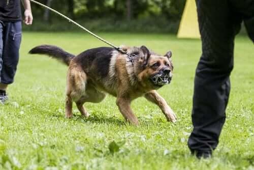 Köpeklerde Saldırganlığı Nasıl Önleyebilirsiniz?