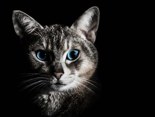 kediler geceleri daha iyi görür