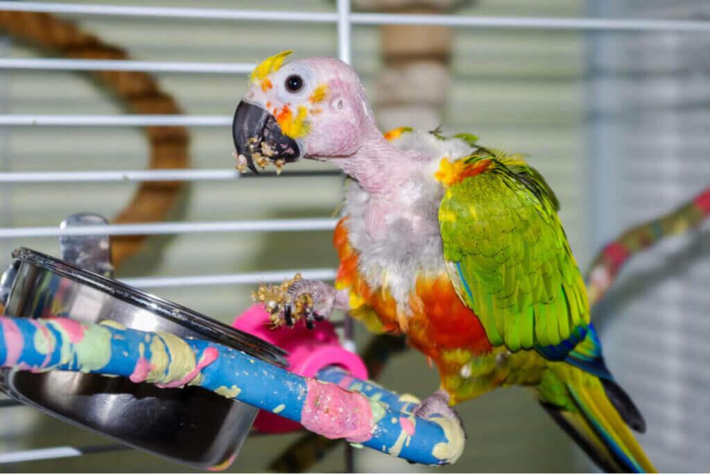 Kuşlarda Tüy Gagalama: Nedenleri ve Tedavisi
