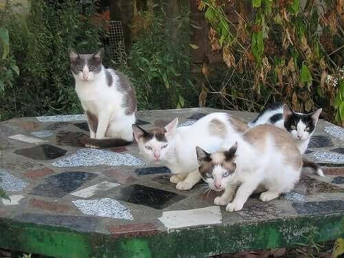 Kedileri Anlamak: Kedi Sahipleri İçin Bir Kılavuz