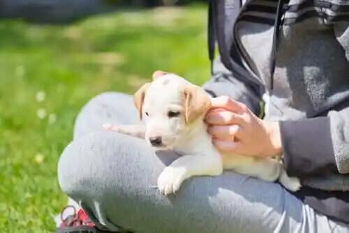 yavru köpek sahibinin kucağında oturuyor
