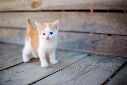 Yeni Doğmuş Yetim Yavru Kedi Bakımı