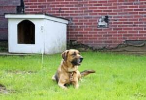 kulübesine bağlı bir köpek