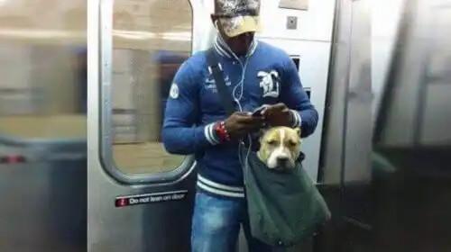 metroda alışveriş arabasında bir köpek