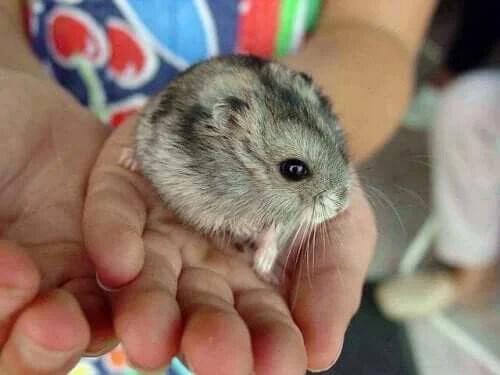 Hamster Isırığı İçin Endişelenmeli misiniz?