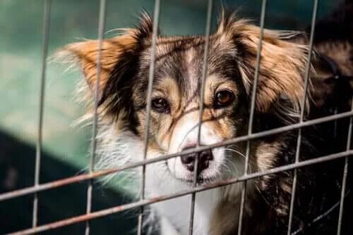 Hayvan Barınakları için Fon Toplayan Köpekle Tanışın