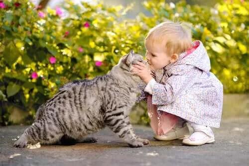 Bir Kedi ve Bebek Birlikte Mutlu Bir Şekilde Yaşayabilir mi?