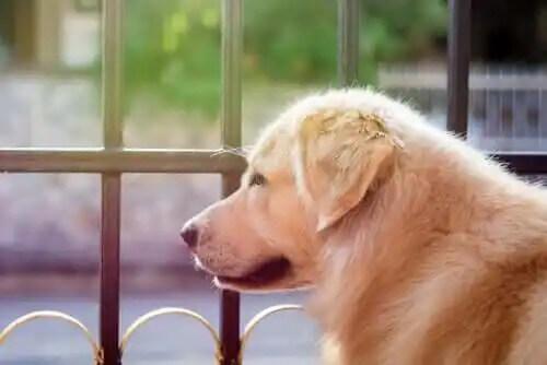 boşluğa bakan köpek