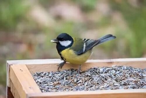 Kuşlarınızın Asla Yememesi Gereken Zehirli Yiyecek Türleri