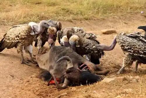 doğada vahşi hayvanlar