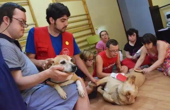 down sendromlu insanlar ve köpekler