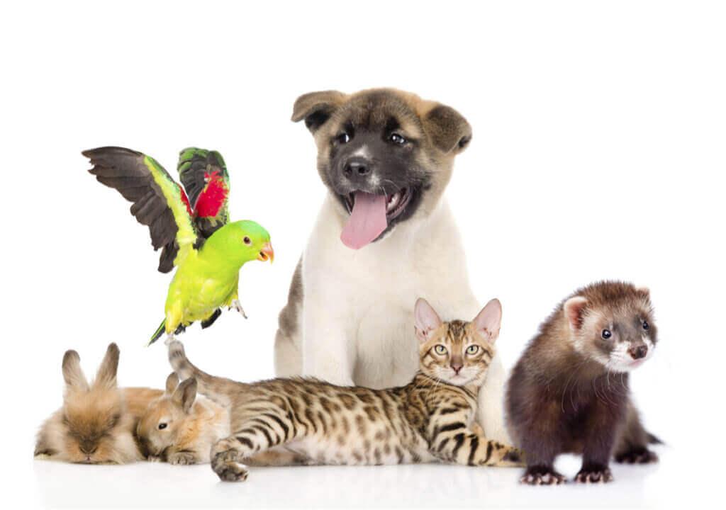 Evcil Hayvanları Sorumlu Sahiplendirmek Önemlidir