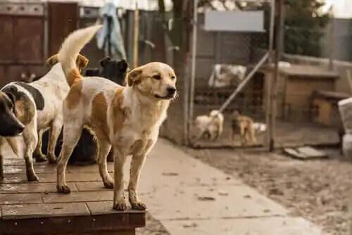 barınakta kimsesiz köpekler