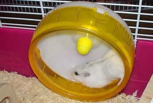 Hamster Tekerlekleri - Hamsterler Neden Onlara Deliriyor?