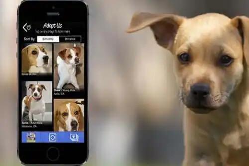 köpek uygulaması telefon