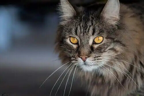 kameraya bakan kedi