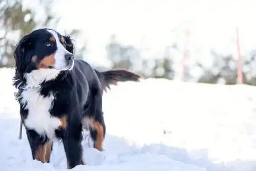karda duran köpek