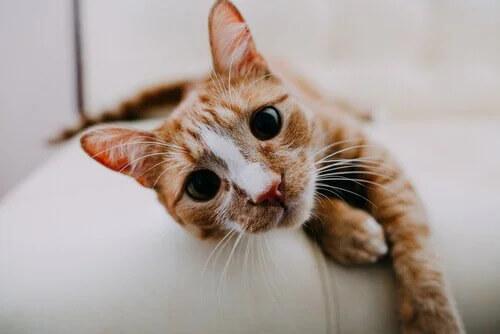 Kedilerin 9 Nefes Alma Yolunu Biliyor musunuz?
