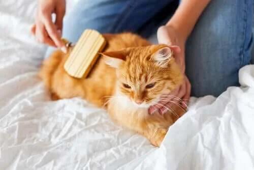 Kedi Tüy Yumakları - Onlarla Nasıl Başa Çıkılır