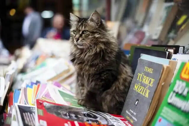 kitapların arasında kedi