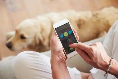 cep telefonundan köpek için uygulama kullanmak