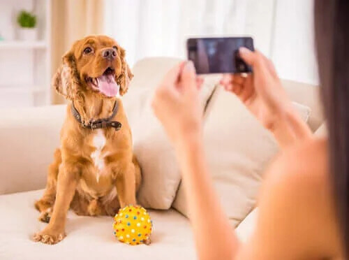Köpek Sahipleri için En İyi Uygulamalar