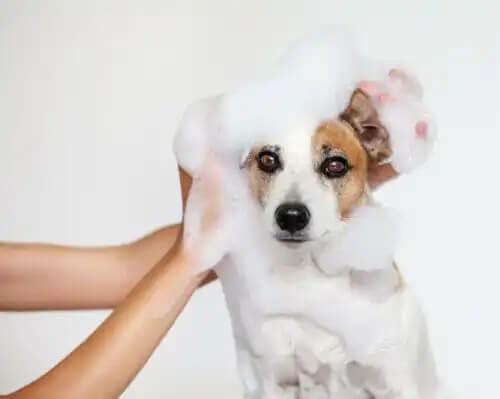 köpükler içinde banyo yapan köpek