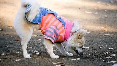Sonbahar Modası: Köpeğiniz İçin Son Trendler
