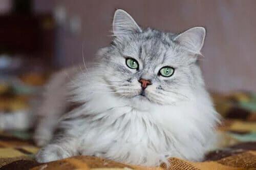 Kediler Nasıl Kötü İtibar Sahibi Oldular?