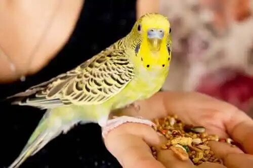 avcunda yem olan insan ve sarı kuş