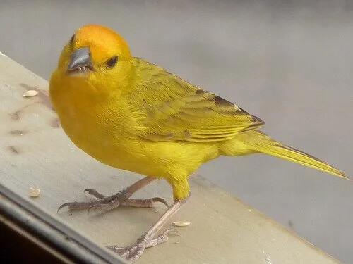 Bir Kuşun Cinsiyeti Nasıl Belirlenir