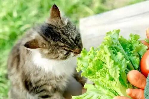 marul koklayan kedi