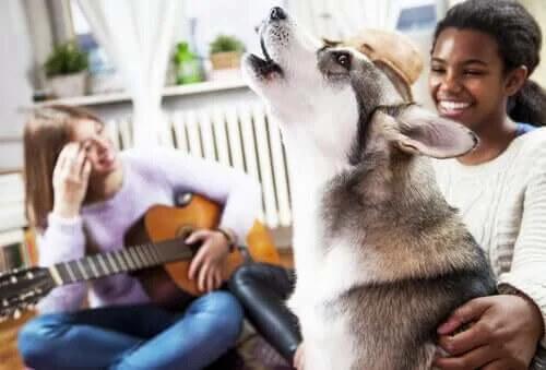 Köpekler ve Müzik - Hayvanların Müzik Algısı Var mı?