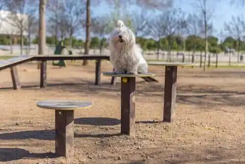 parkta oturan köpek