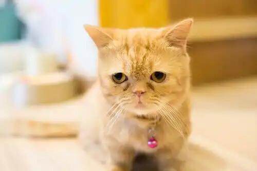 pembe tasmalı yavru kedi