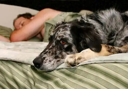 sahibiyle yatakta yatan köpek