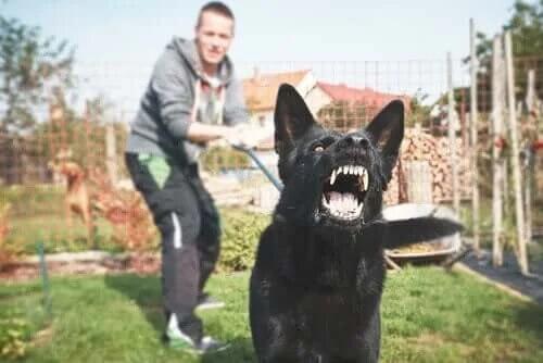Potansiyel Olarak Tehlikeli Bir Köpek Nasıl Eğitilir