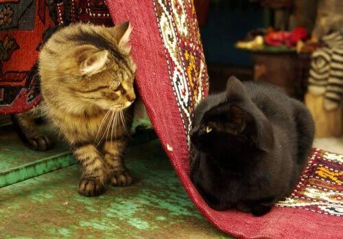 Kedi Barınağı Olarak Görev Yapan Cami Hakkında Bilgi Edinin