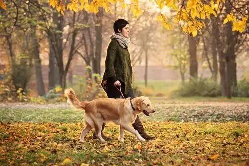 sonbaharda yürüyüş yapan sahibiyle köpek